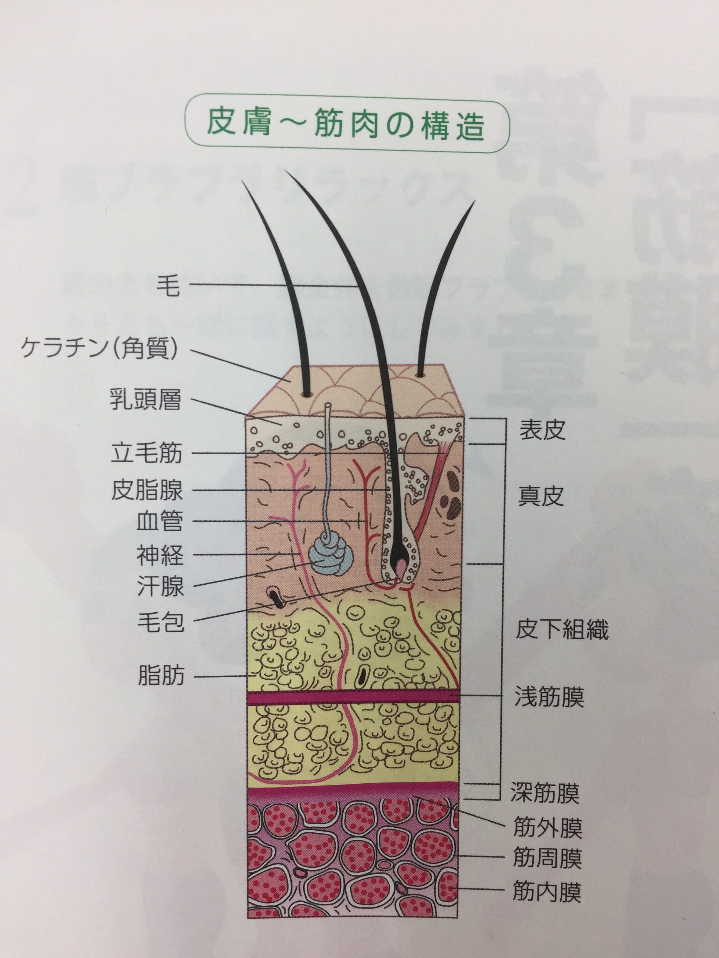 仙台の整体で筋膜リリースをしているルーツ
